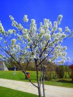 En Les Vosges abril 2014