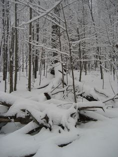 Snowy woods behind cabin.