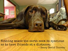 Missing you quote  Thoreau  friendship quote  by milosmailboxco, $2.50