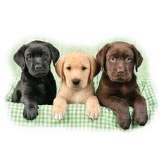 Tablett Hunde Familienausflug Labrador Retriever Weihnachten Tischdeko Untersetz