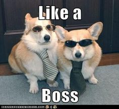 Totally cute.. Deffinetly like a boss. <3
