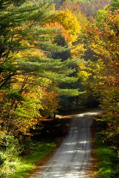 Every year Neateeshirt designers visit Vermont in the autumn. Here is a dirt road inviting a stroll through autumn beauty.