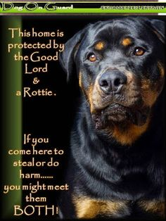 Dog On Guard :