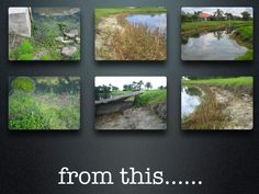 #LetGoSeeus Slide 3 from the San Ramon Eco Festival. Waterford, this is where I started to get heavily involved. My embankment was disappearing ($$$) and I had an Algae bloom on my own doorstep and I couldn't even go Surf at the beach with the Red Tide in full-force. Something had to be done!!