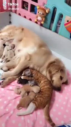 Cute Kittens And Puppies Together a Cute Animals To Draw Easily Cute Animal Videos, Funny Animal Pictures, Cute Funny Animals, Cute Baby Animals, Funny Dogs, Animals And Pets, Cute Cats, Jungle Animals, Kittens Cutest