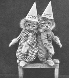"""LOL Cats, 1870s style: """"Even in the 1870s, humans were obsessed with ridiculous photos of cats. If you think the notion to slap cutesy epigrams on top of photographs of kittens originated with the internet, think again. Deranged cat pictures have been around since the early days of photography. Once humans got their hands on cameras, the dignity of the domesticated feline was forever doomed."""""""
