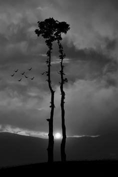Kiss oak by Bess Hamiti
