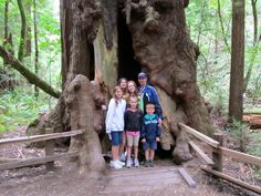 Family Pic Muir Woods National Monument, Trees, Colorful, Couple Photos, Couple Shots, Tree Structure, Couple Photography, Wood, Couple Pictures