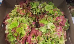 #Hydrangea #Hortensia #Wreath; Available at www.barendsen.nl