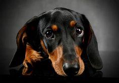 Kutyaportrék, amiknek nem lehet ellenállni - Nők Lapja Café