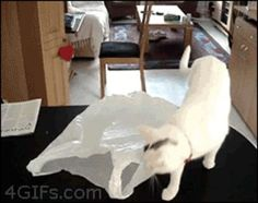 Cats + Bags = Nope