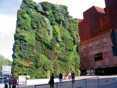 Vertikale Begrünung große grüne vertikale begrünung auf die fassade einem hochhaus