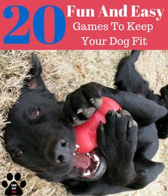 Playing with your dog is almost always a fun time. Whether you're throwing a ball, or just having a game of tug of war, you're keeping your dog active. But what else can you be doing to keep them in shape mentally and physically? We've compiled a list of Beagle, Dog Games, Dog Activities, Dog Training Tips, Crate Training, Labrador, Dog Life, Dog Toys, Dogs And Puppies