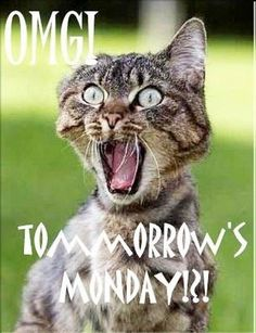 I hate Mondays.  The weekend is over.