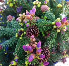 Dwarf Weeping Trees for Landscaping | picea abies | Tumblr