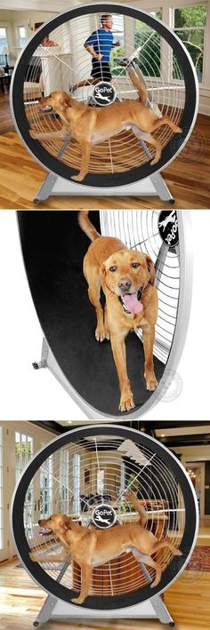 This is hilarious. - A giant hamster wheel for dogs! Now you can give your dog the cardio workout he needs without even leaving the house, using the Gopet TreadWheel.