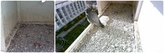 Salt Lake's famous peregrines are back, and there's already one egg in the nest! Watch the nest cam live: http://wildlife.utah.gov/peregrine