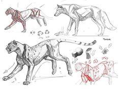 what to draw when bored Dog Anatomy, Anatomy Drawing, Anatomy Art, Animal Anatomy, Animal Sketches, Animal Drawings, Art Sketches, Art Drawings, Cat Reference