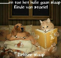 Read it again.it's my favorite - Cat memes - kitty cat humor funny joke gato chat captions feline laugh photo Funny Cats, Funny Animals, Cute Animals, Stupid Funny, Funny Dachshund, Animal Pictures, Funny Pictures, Amazing Pictures, Image Chat