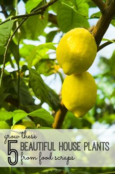 These 5 Beautiful House Plants From Food Scraps via @tipsaholic