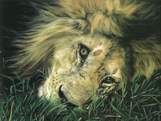 Touch the hearts of animal oil painting