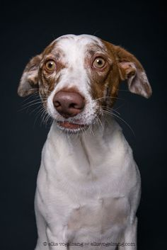 This Photographer Amusingly Captures The Skeptic Hiding Within Many Dogs.