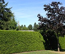 Block out your neighbors and relax comfortably in your back yard after planting privacy trees. Privacy Trees will quickly transform your yard into your personal get away and provide you with many relaxing benefits…