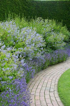Curving brick pathway along mature monochromish perennial bed.