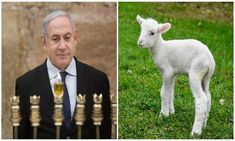 Netanyahu Considers Pascal Lamb Sacrifice on Temple Mount for First time in Years - Breaking Israel News Passover Feast, Breaking Israel News, Brit Milah, Revelation 11, Exodus 12, End Times Prophecy, End Time Headlines, 2 Thessalonians, Temple Mount