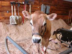 Horsefest 05-21-2011.046 by nellliz2000, via Flickr