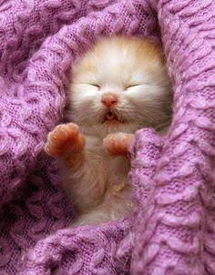 awww #tiny #cats #kittens