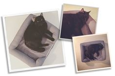 There's a new favorite cat bed in our house! (I know I say that a lot, but this one is seriously awesome!)If occupancy levels are any indication, this might be the perfect cat bed! It's PetFusion's new Ultimate Lounge Bed and it has all the features cats (at least mine) love. First, the bed has…
