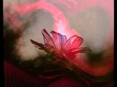 LA RIVELAZIONE - da Pensieri e Aforismi di Sri Aurobindo (con audio per non vedenti)
