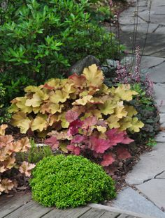 """Plant Combination: Chen tells me that the neat green mound at the front of this planting is Buxus microphylla 'Kingsville'. It is """"probably ..."""