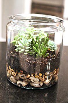 DIY Succulent Terranium.. use an old candle jar?