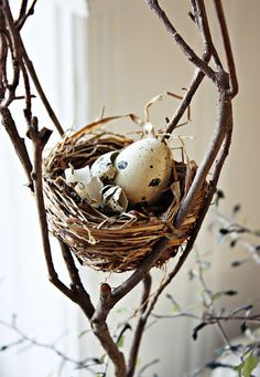 Gorgeous natural nest