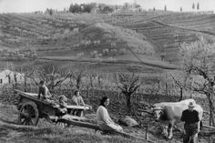Henri Cartier-Bresson- ITALY. Tuscany. Province of Siena. 1953
