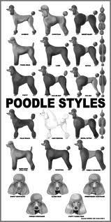 Here is a poster of all the common poodle styles. Obviously there is much more you can do with a poodle like creative grooming and Asian fusion but these are classic trims known for decades some even centuries. Dog Grooming Styles, Dog Grooming Tips, Poodle Grooming, Dog Grooming Salons, Puppy Cut, Puppy Love, Bichon Frise, Cortes Poodle, Poodle Cuts