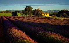 Paysage de Provence à la tombée de la nuit