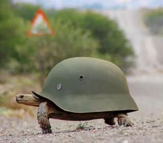 Prepared tortoise