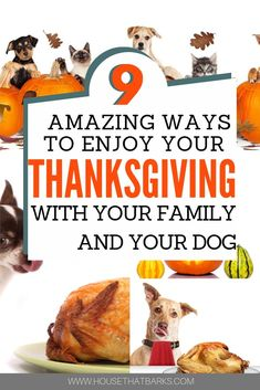 9 Ways to Enjoy your Thanksgiving with Your Dog. dogs with dogs for dogs and thanksgiving food food recipes recipes Dog Treat Recipes, Dog Food Recipes, Diarrhea In Dogs, Dog Nutrition, Dog Best Friend, Dog Care Tips, Pet Care, Natural Dog Food, Dog Eating