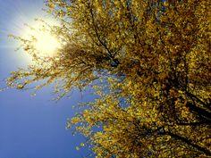 Pretty desert trees are like blooming bohemians of spring. http://www.hemheist.com