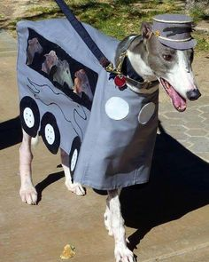 How about this for a Halloween costume - a Greyhound bus!
