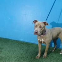 Available Pets At Orange County Animal Services In Orlando Florida Pets Animals Large Animals