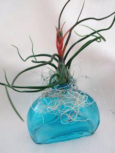 Fiji Aqua glass vase with Blooming Bulbosa by ThePerfectPlant