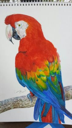 Perched 11x15 Watercolor Unframed $65