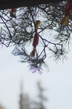 Pine branch decorated with Christmas candy Pine Branch, Christmas Candy, Photo Editing, Stock Photos, Fine Art, Creative, Outdoor Decor, Flowers, Pictures