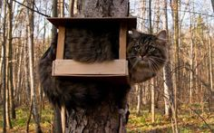Cat Tree Houseℒℴℒ... just keeping it warm until they get back in the spring.
