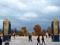 Embrace the Parisian Natural Beauty of the Tuileries Garden Paris Garden, Golden Gate, Parisian, Big Ben, Natural Beauty, Gardens, Building, Nature, Travel