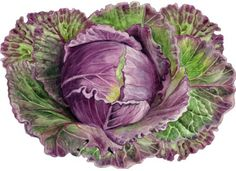 January kind cabbage - specially shaped wooden puzzles. www.jigsaws.co.uk